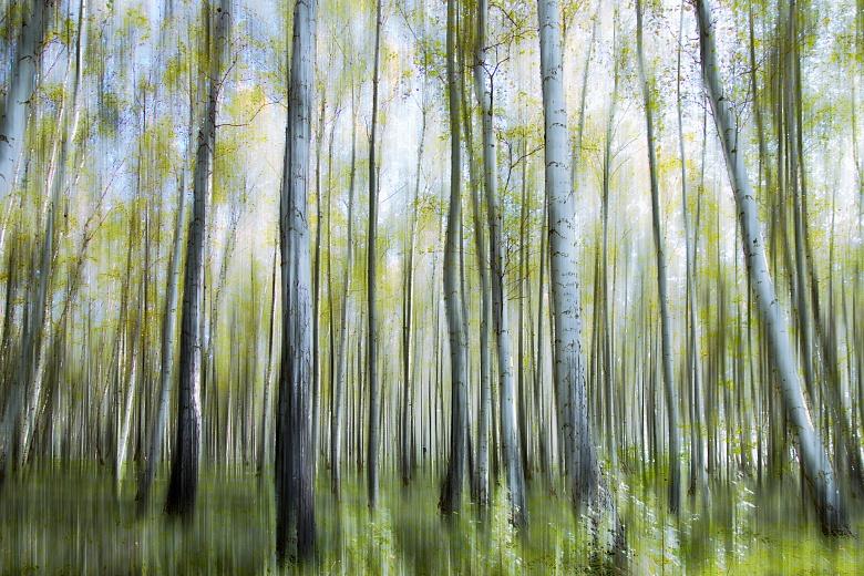 Designer tapete im birkenwald c steinicke tapeterie for Tapete birkenwald